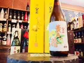 八千代伝 黄色い椿【春季限定蔵出し】