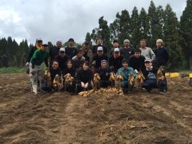 第2期19歳の焼酎プロジェクト芋掘り、仕込み編