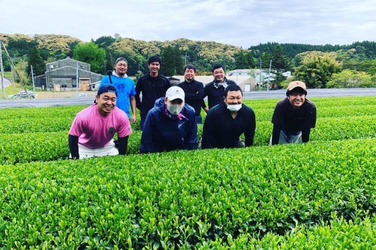 柳田製茶さんへ、茶摘み体験。