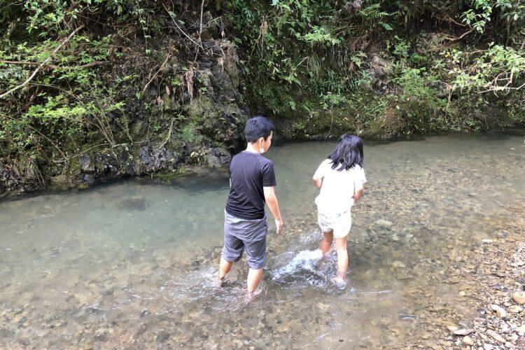 嶺岡豆腐と黒さつまの入荷と、子供達は川へ・・・私は流木を求めて・・・